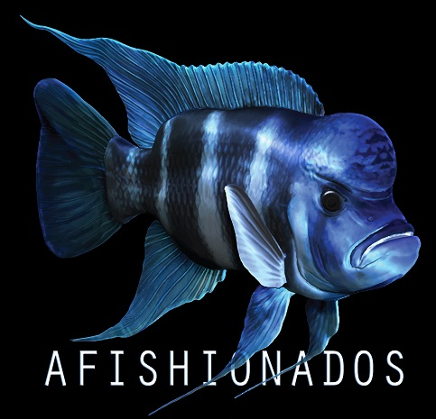 The aFISHionados
